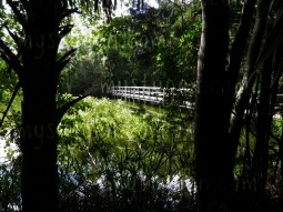 ormond-beach-florida-park