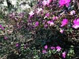 Ravine Gardens, Palatka FL