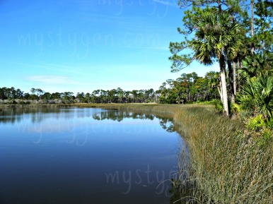 Fishing area from Favor Dykes State Park in St Augustine FL
