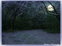 woods christmas pic5