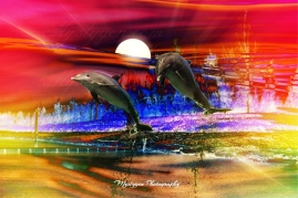 dolphin sunset