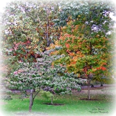 frickparkcolortree