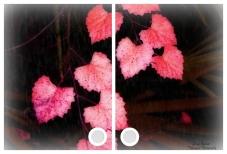 orange heart leaves windowcrp