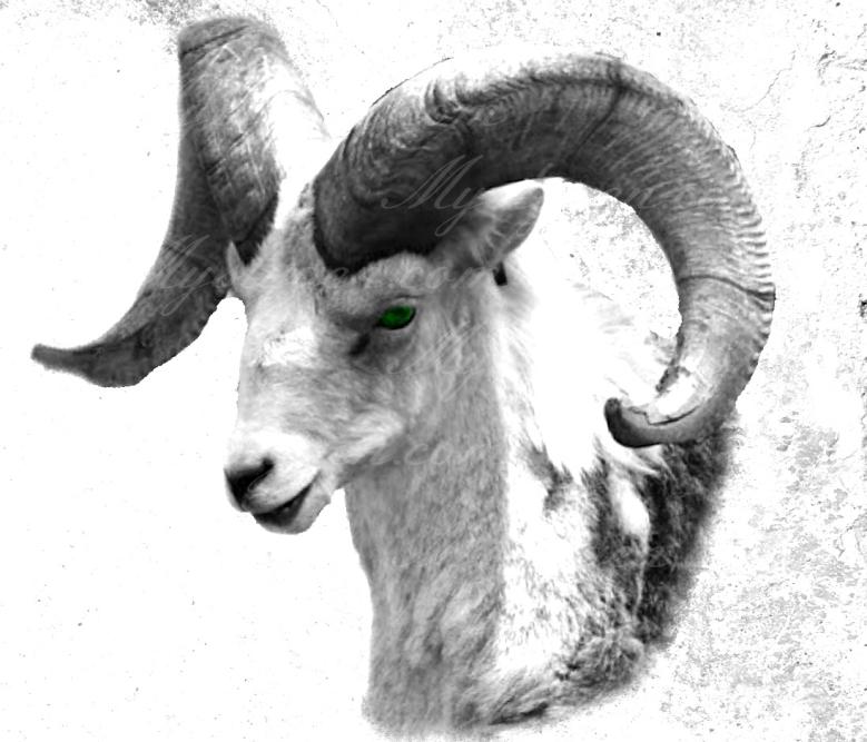 Ram12