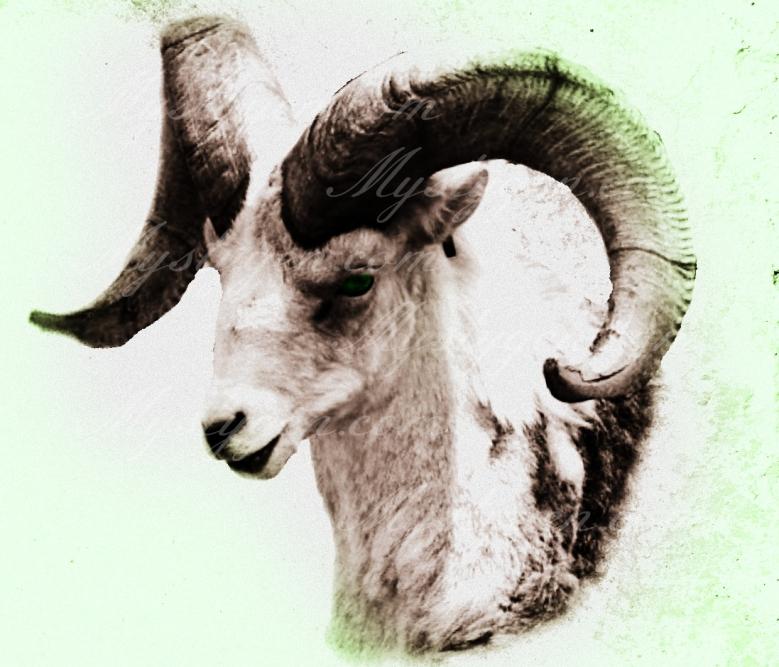 Ram13