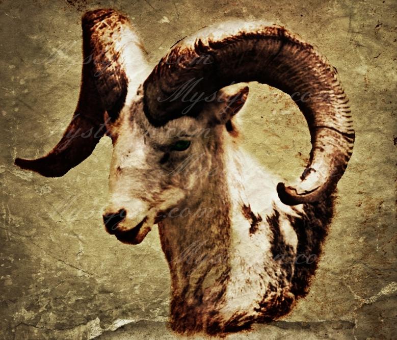 Ram15